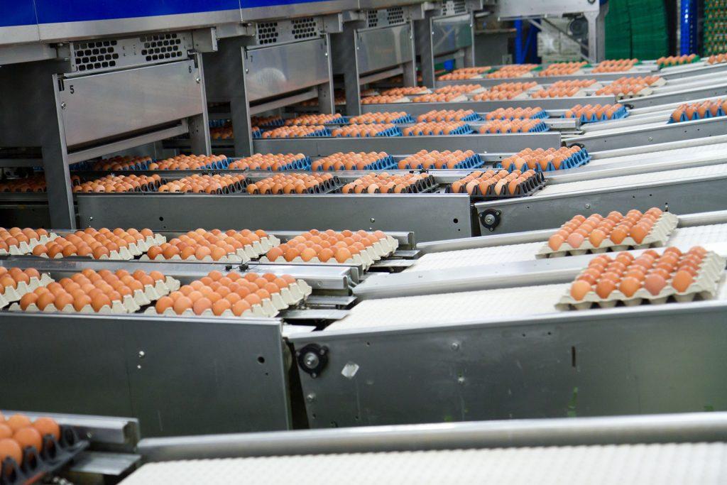 hatcher-and-incubator-machines